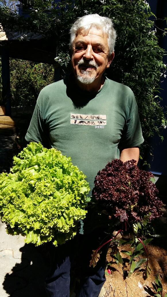 Colheta de verduras