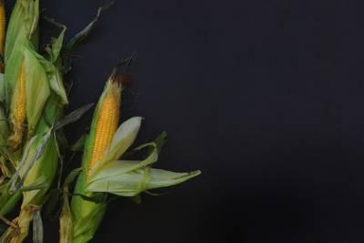 Milho, caule, plantas, pretas, fundo