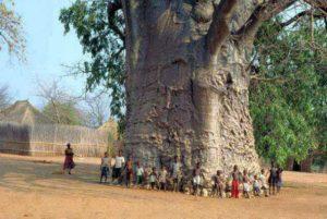 África e o árido